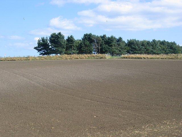 Newly sown field, Bonnington.