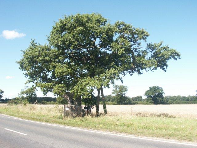 Kett's Oak, Hethersett