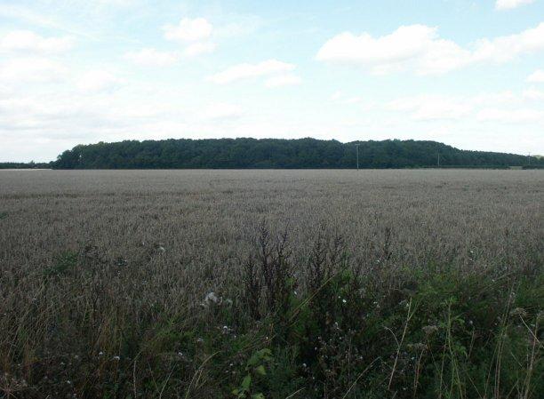 Smeeth Wood, Ketteringham