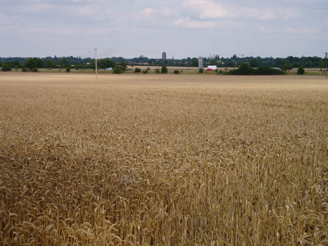 Wheat field near Wheatcases