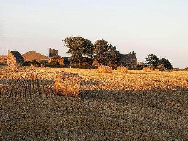Ardross farm