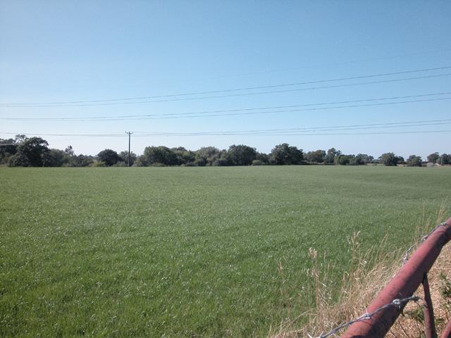 Picton Grassland