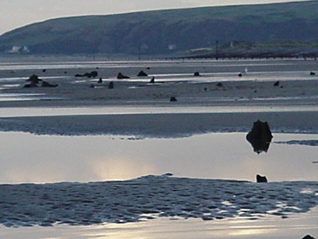 Drowned forest at Borth