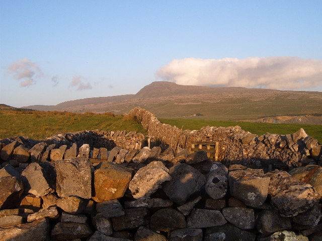 Sheep folds and Ingleborough