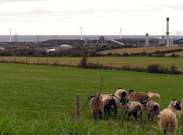 Sheep farm, wind farm and factory