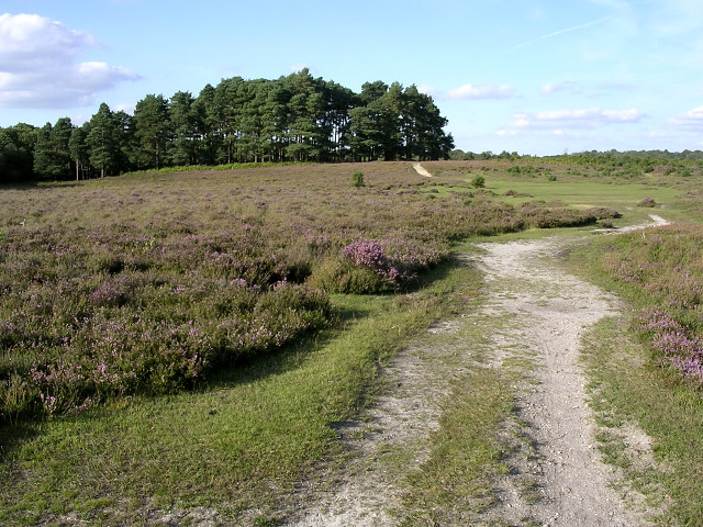 Path across White Moor, towards Longwater Lawn, New Forest