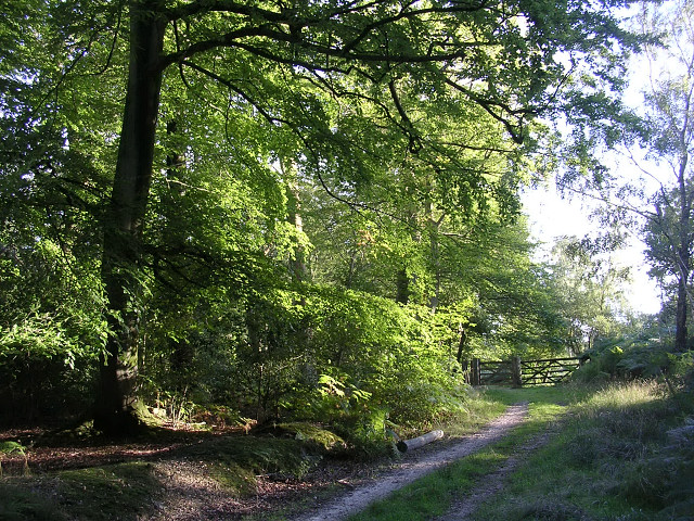 Southern corner of the Ironshill Inclosure, New Forest