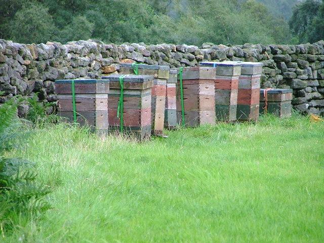 Beehives Potter House Farm