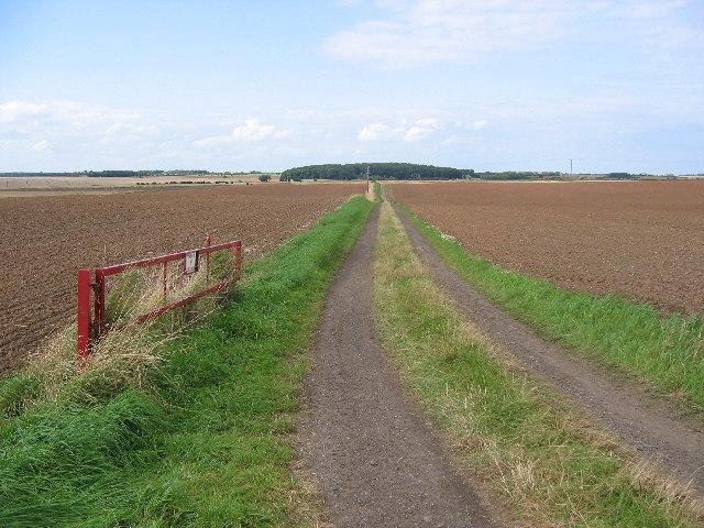 Farmland north of Patrington
