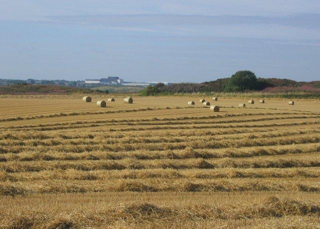 Greendykes harvest