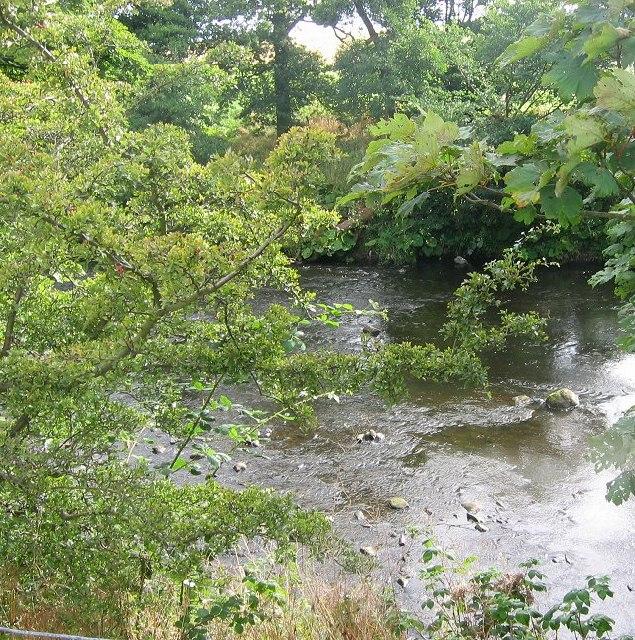 River Almond.