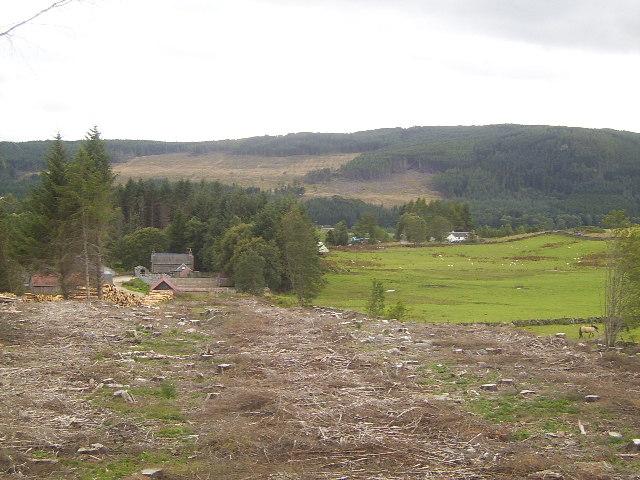 Cleared Forest near Enochdu