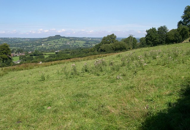 Pasture land on the hillslope above Honiton