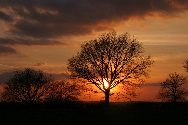 Sunset over Galleywood Common