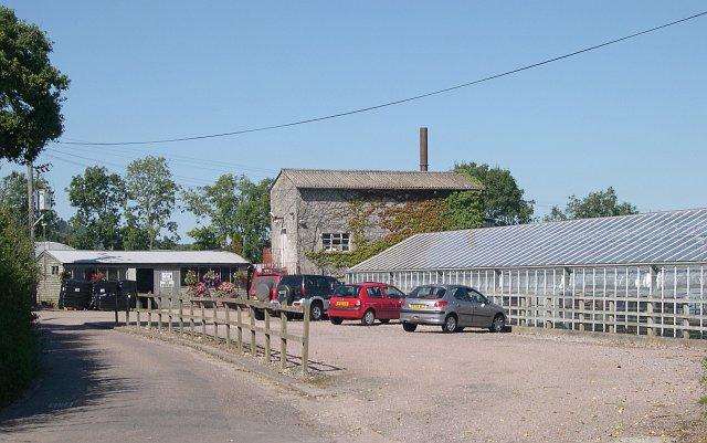 Plant nursery near Stonehayes