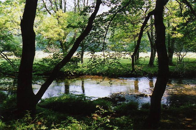 Dulverton: River Barle