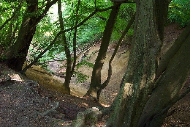 Jelleys Hollow, Winterfold Heath