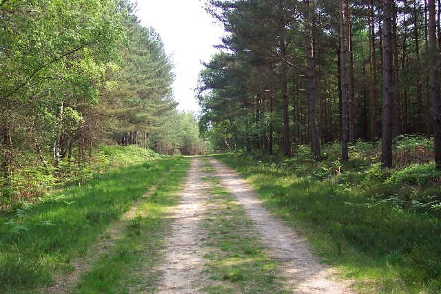 Trackway through Winterfold Wood