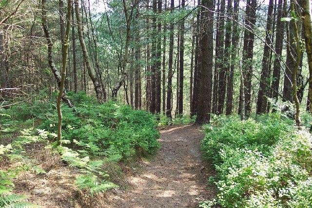Path through the Hurt Wood
