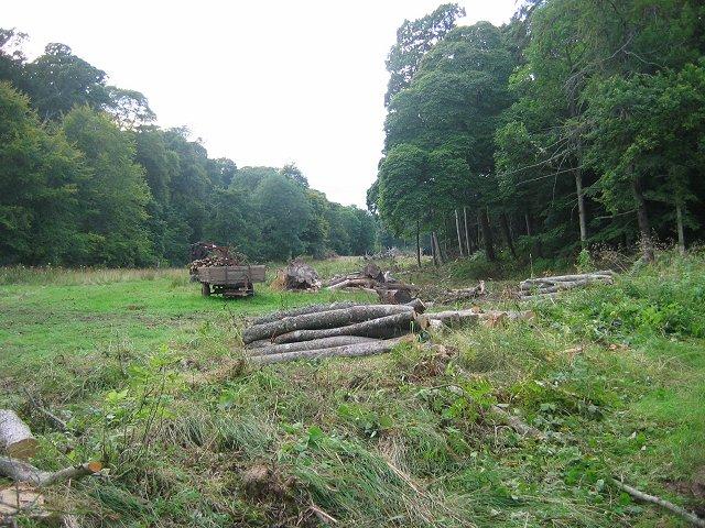 Forestry work, Colstoun.