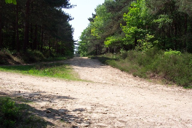 Junction of tracks in the Hurt Wood