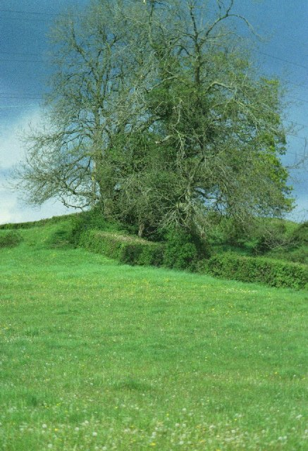 Hill and tree beyond Blagdon Lake
