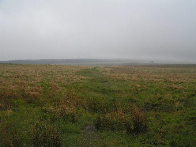 Haughton Common