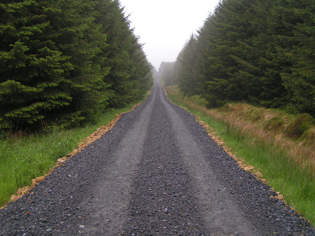 Forestry Road, Wark Forest