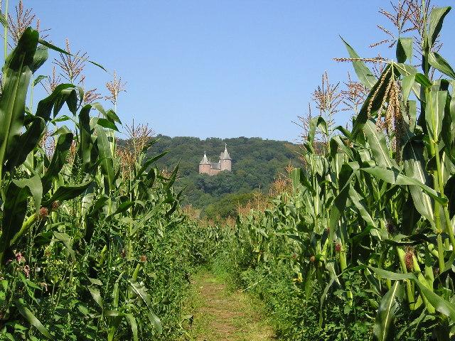 Gelynis Farm maze Morganstown.
