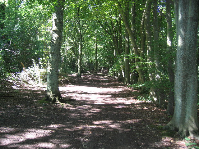 Low Scrubs Woods