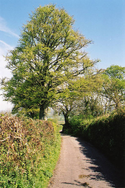 Kentisbeare: north from Blackborough