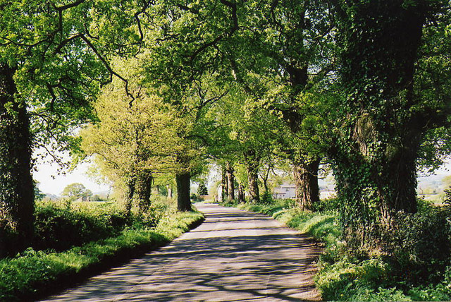 Uffculme: road near Bradfield
