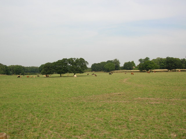 Field of Cows.