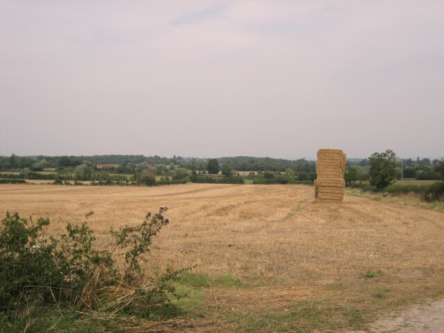 Field at Walcot