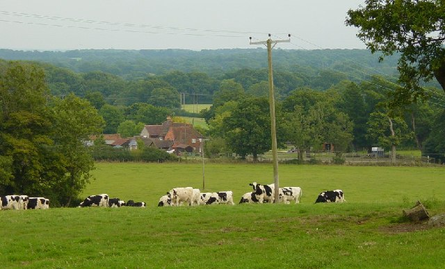 Crays  Farm