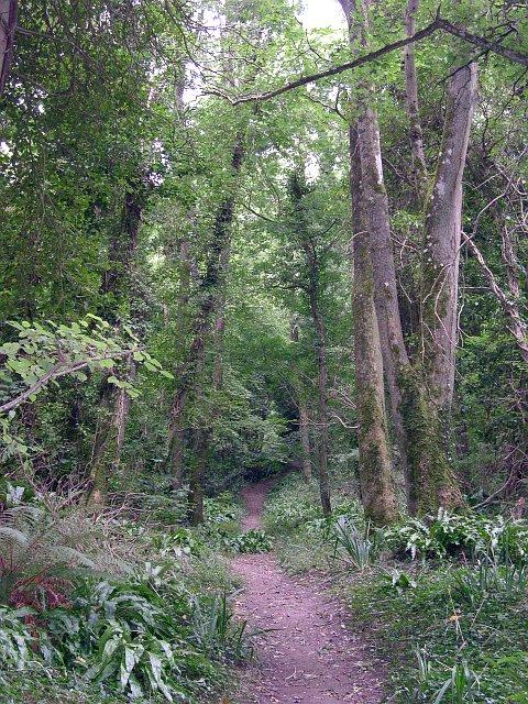 Path through Dowlands Landslip