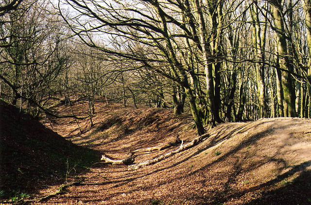 Payhembury: Hembury hillfort