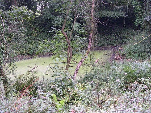 Ravine Pond
