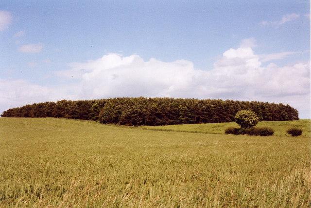 Downhill plantation