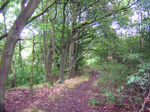 Birley Wood, Standish Lower Ground
