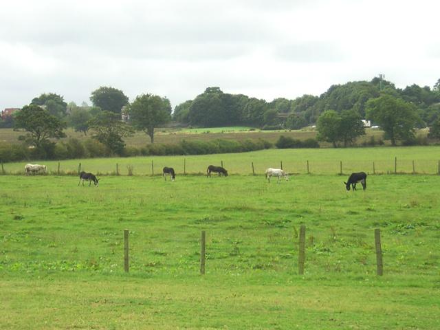 Donkeys grazing on The Bell
