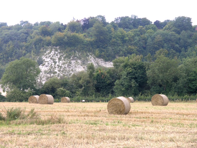 Hay Fields with the North Downs in the background