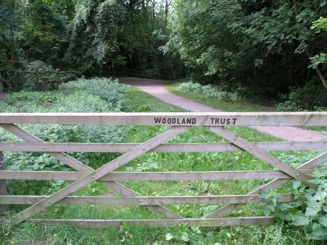 Woodland Footpath, part of the Woldingham Country Walk