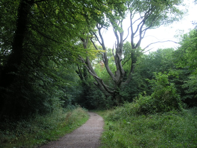 Marlesdon Park footpath