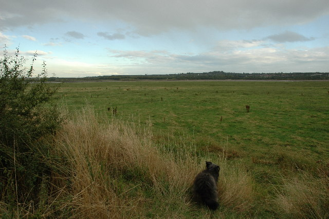 Open land between Sankey/St.Helens Canal and the River Mersey