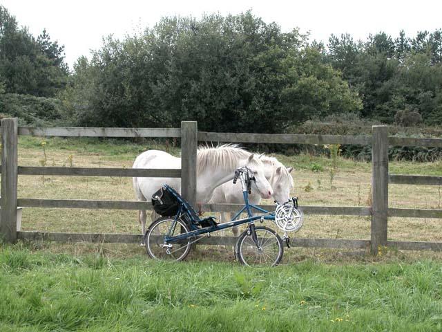Curious Ponies near Dobshill.
