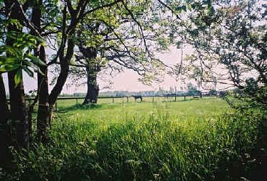 Freedom Farm, East Green, Great Bradley, Suffolk