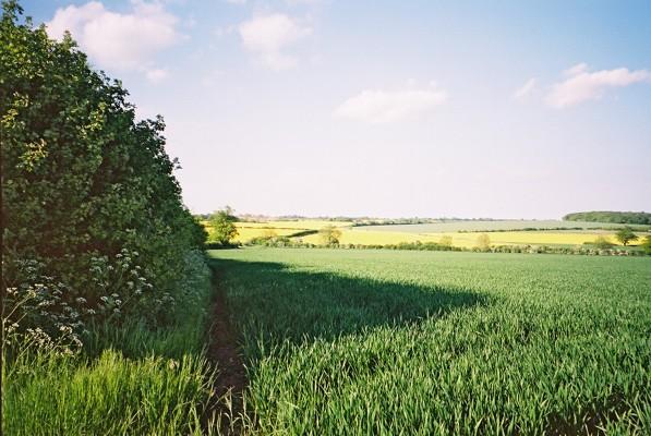 Beyond Freedom Farm, East Green, Great Bradley, Suffolk