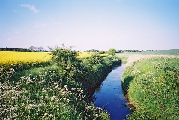 Kirtling Brook, Great Bradley, Suffolk