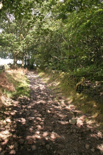 Royds Hall Lane, Old Hanna Wood